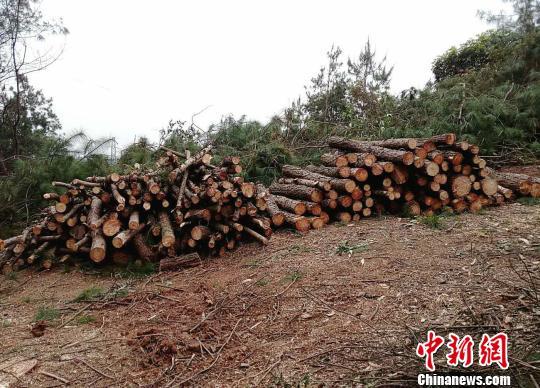 图为嫌疑人滥伐部分林木的现场。 甘勇 摄