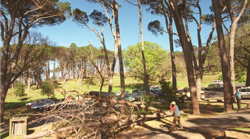 警告!约堡居民因非法砍伐树木被罚款100万兰特