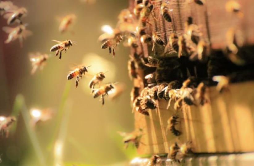 比勒陀利亚学校遭蜜蜂袭击,20名学生和工作人员被紧急送往医院