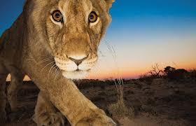 """""""南非动物""""的图片搜索结果"""